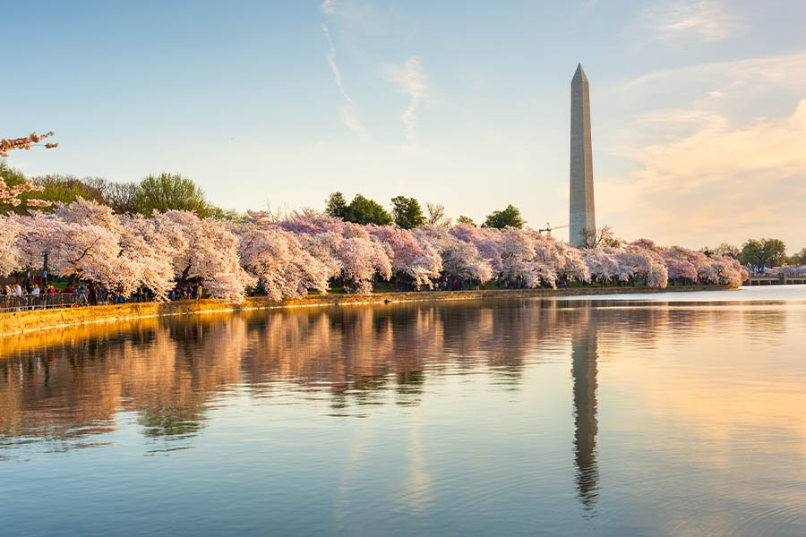 Who We Are - Washington DC in Spring with Cherry Blossoms, River and Monument in the Background